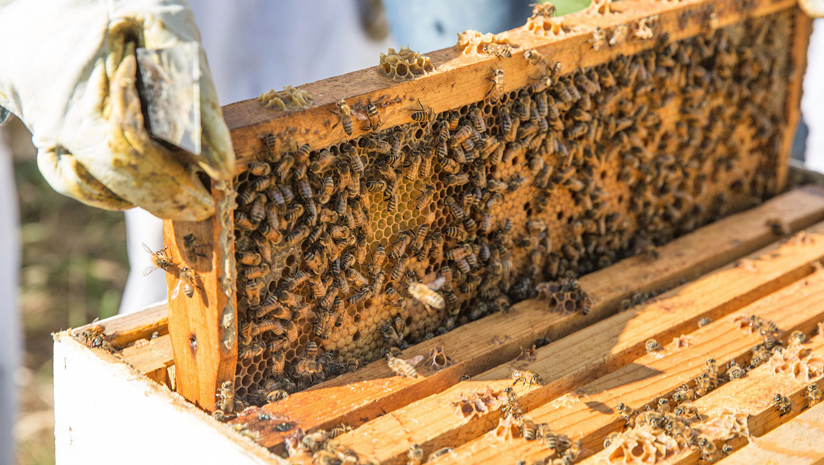Southside Beekeeping Club