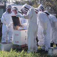 Flow Hive Bee Course